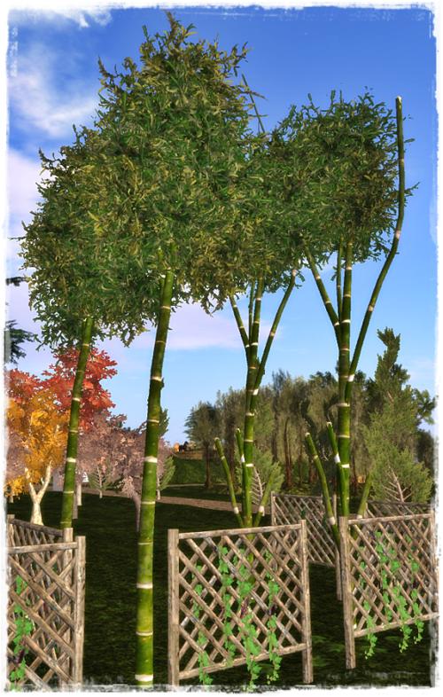 bambus3p
