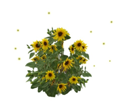 VC_-_Plant_1_Prim_-_Helianthus_annuus__flying_Particels_in_many_colors