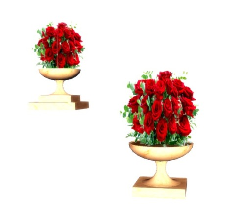 VC_-_Wedding_Roses_RED_in_POT