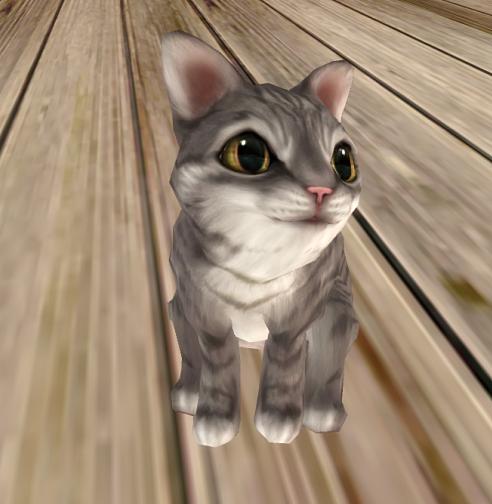 jian-kitten