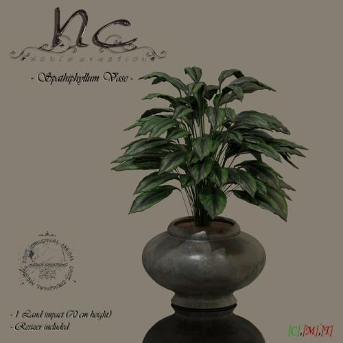 nc-spathiphyllum-vase