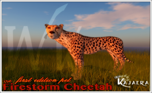 wk-firestorm-cheetah-crated