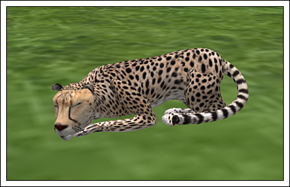 wk-firestorm-cheetah-crated1